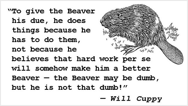 To give the Beaver his due, he does things because he has to do them, not because he believes that hard work per se will somehow make him a better Beaver — the Beaver may be dumb, but he is not that dumb!