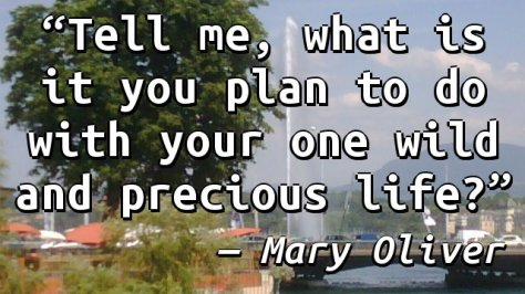 Tell me, what is it you plan to do with your one wild and precious life?